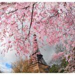 Цикл занятий freedomDANCE «Весна в Париже»