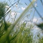 Про чувствительность.  Шорохом гравия под ногами и запахом сена навеяло…